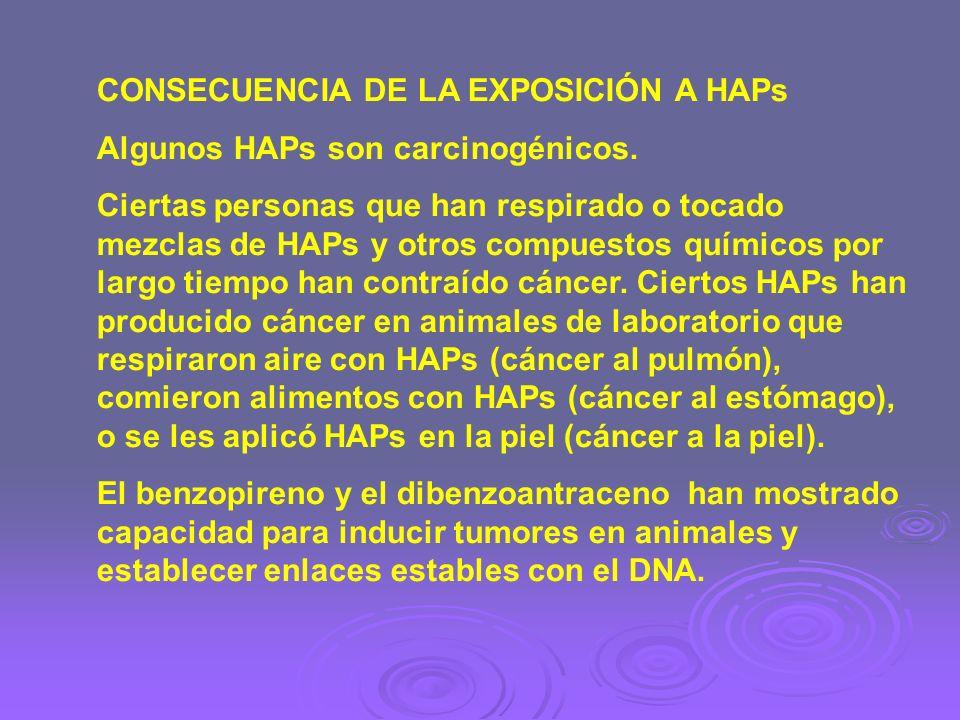 CONSECUENCIA DE LA EXPOSICIÓN A HAPs