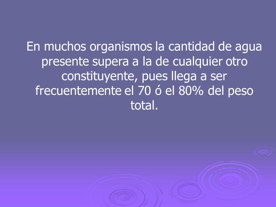 En muchos organismos la cantidad de agua presente supera a la de cualquier otro constituyente, pues llega a ser frecuentemente el 70 ó el 80% del peso total.