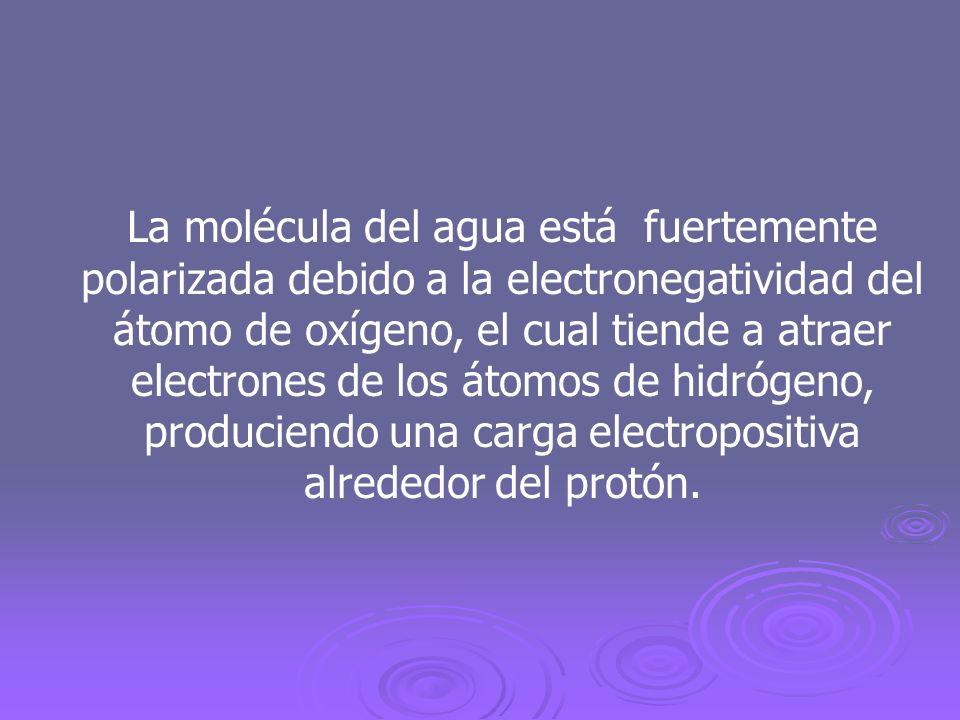 La molécula del agua está fuertemente polarizada debido a la electronegatividad del átomo de oxígeno, el cual tiende a atraer electrones de los átomos de hidrógeno, produciendo una carga electropositiva alrededor del protón.