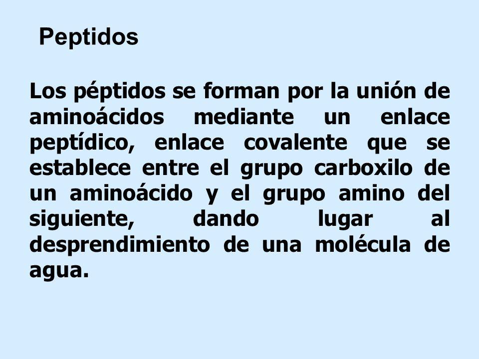 Peptidos