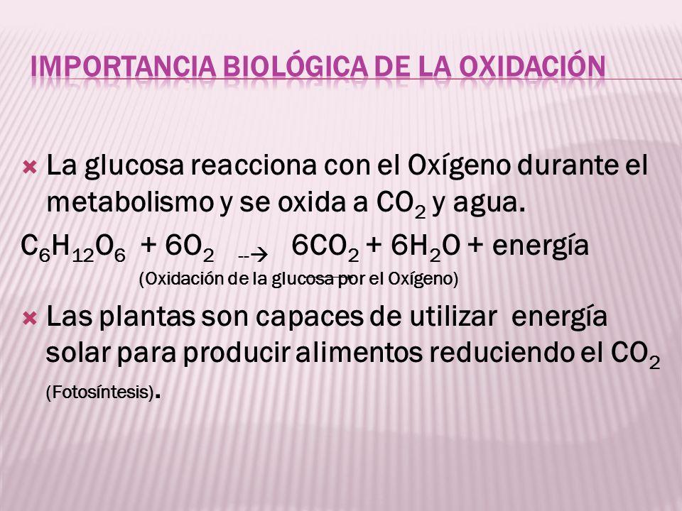 Importancia Biológica de la Oxidación