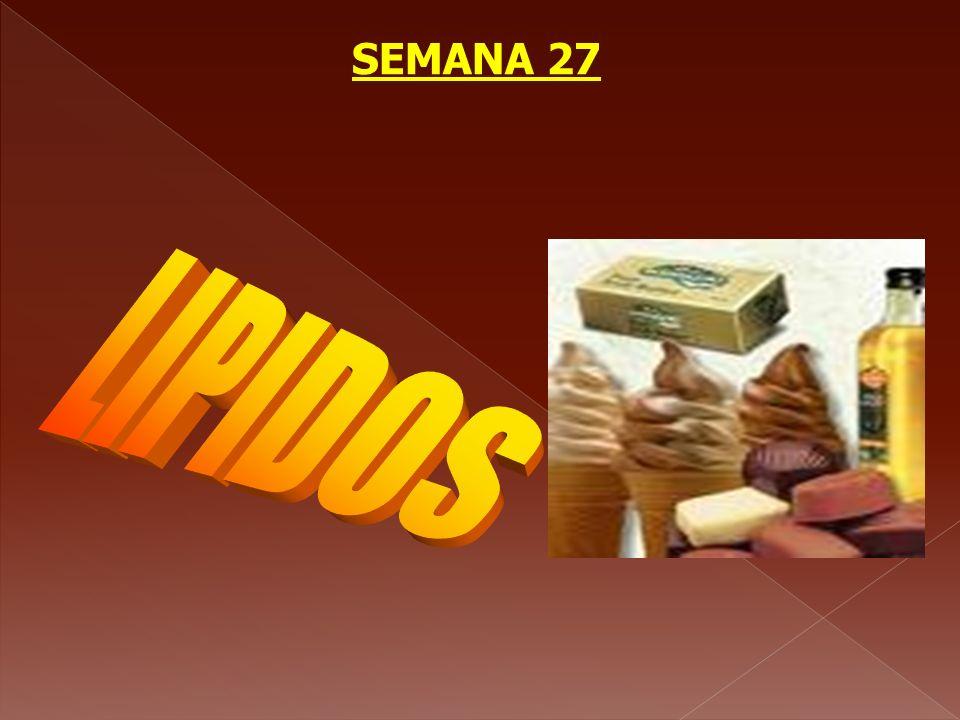 SEMANA 27 LIPIDOS
