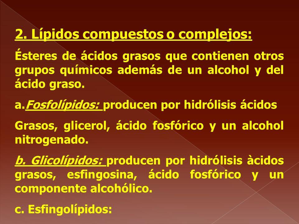 2. Lípidos compuestos o complejos:
