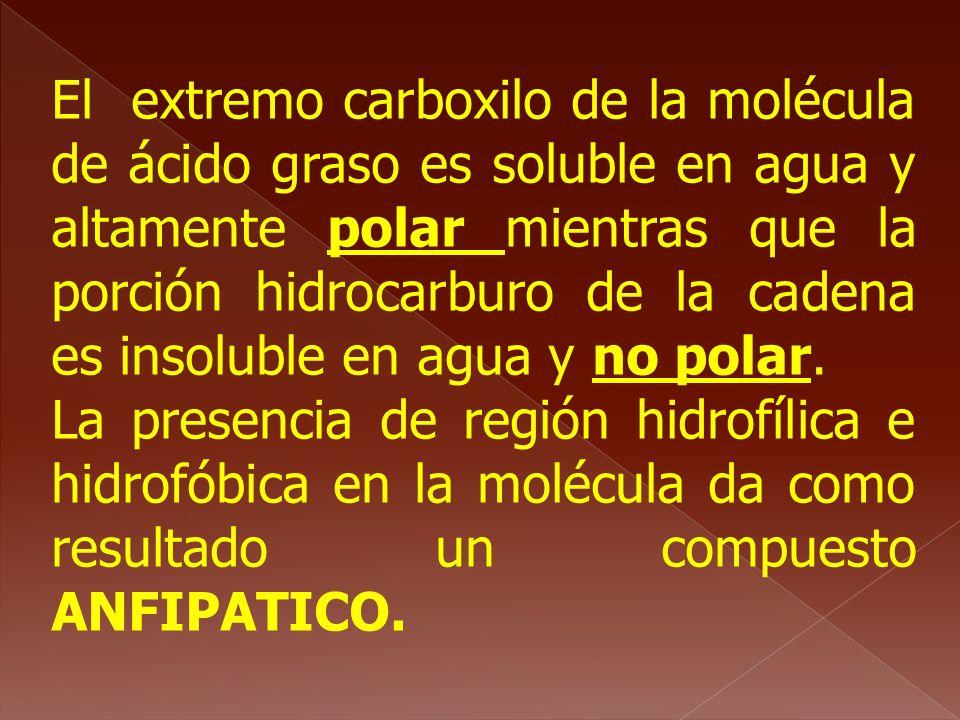 El extremo carboxilo de la molécula de ácido graso es soluble en agua y altamente polar mientras que la porción hidrocarburo de la cadena es insoluble en agua y no polar.