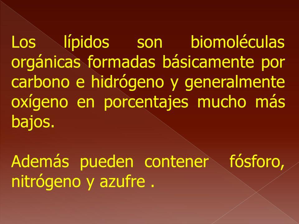 Los lípidos son biomoléculas orgánicas formadas básicamente por carbono e hidrógeno y generalmente oxígeno en porcentajes mucho más bajos.