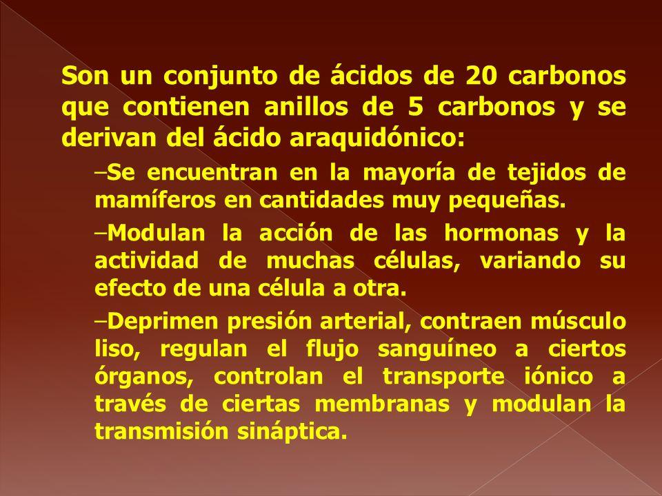 Son un conjunto de ácidos de 20 carbonos que contienen anillos de 5 carbonos y se derivan del ácido araquidónico: