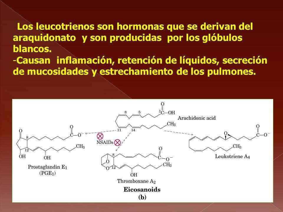 -Los leucotrienos son hormonas que se derivan del araquidonato y son producidas por los glóbulos blancos.