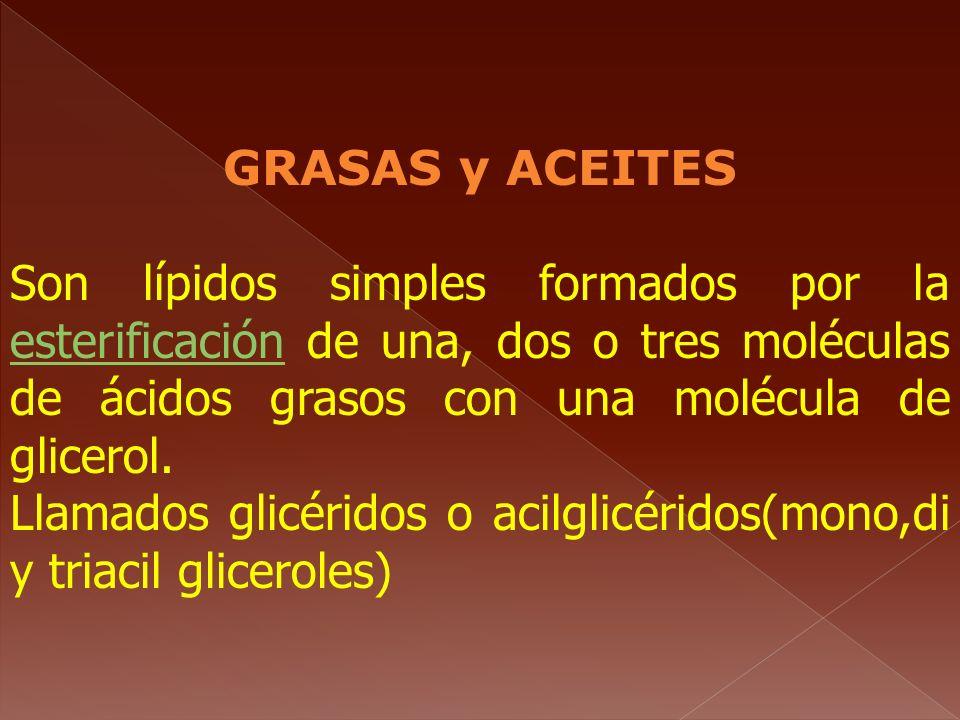 GRASAS y ACEITES Son lípidos simples formados por la esterificación de una, dos o tres moléculas de ácidos grasos con una molécula de glicerol.