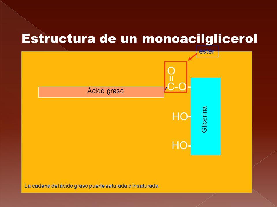Estructura de un monoacilglicerol