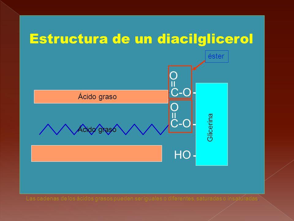 Estructura de un diacilglicerol