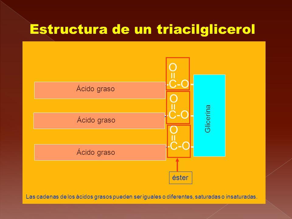 Estructura de un triacilglicerol