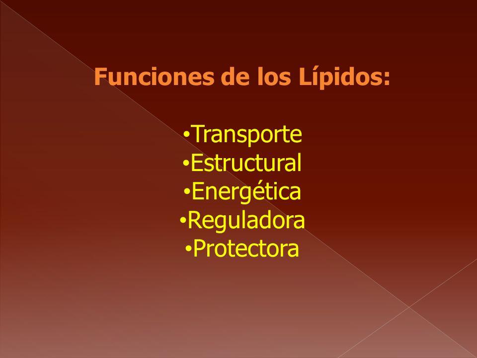 Funciones de los Lípidos: