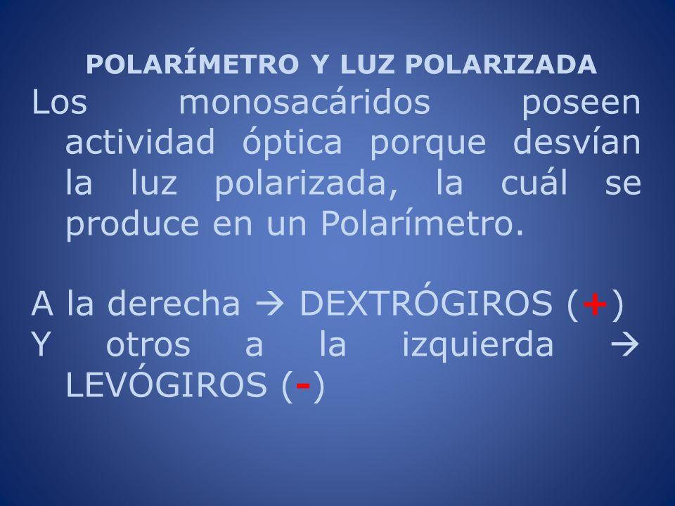 POLARÍMETRO Y LUZ POLARIZADA