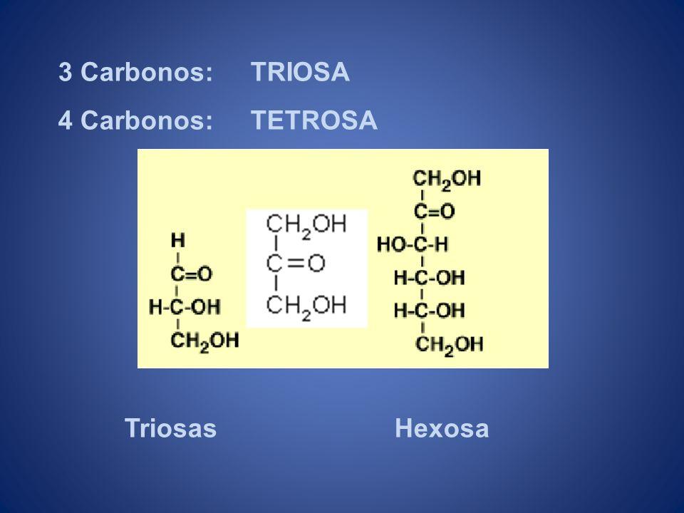 3 Carbonos: TRIOSA 4 Carbonos: TETROSA Triosas Hexosa
