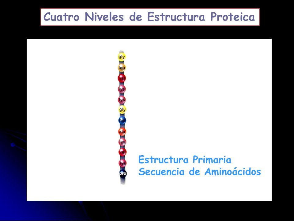 Cuatro Niveles de Estructura Proteica