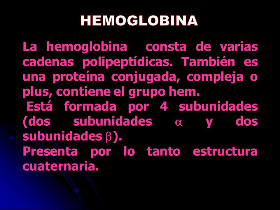 HEMOGLOBINA La hemoglobina consta de varias cadenas polipeptídicas. También es una proteína conjugada, compleja o plus, contiene el grupo hem.