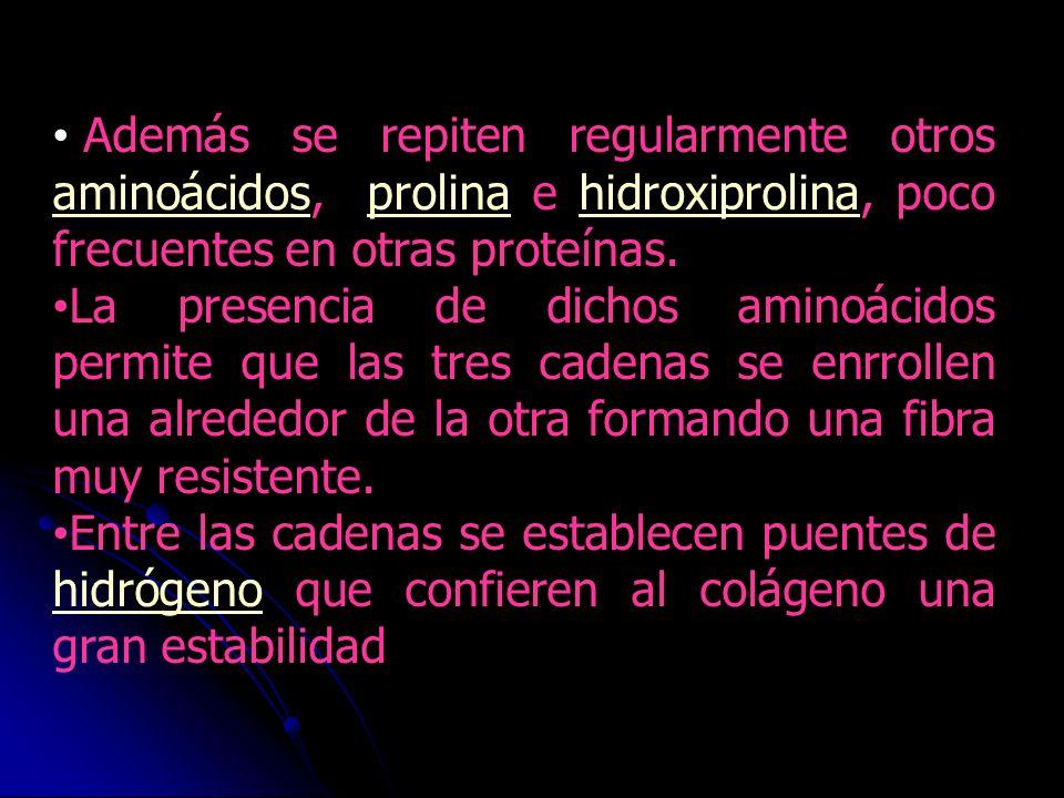 Además se repiten regularmente otros aminoácidos, prolina e hidroxiprolina, poco frecuentes en otras proteínas.