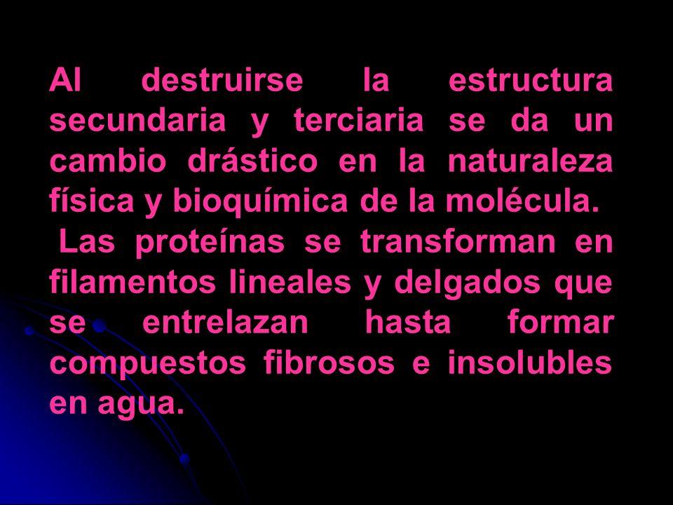 Al destruirse la estructura secundaria y terciaria se da un cambio drástico en la naturaleza física y bioquímica de la molécula.