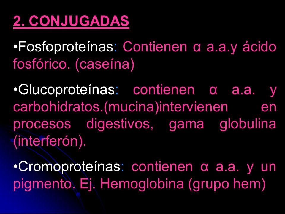2. CONJUGADASFosfoproteínas: Contienen α a.a.y ácido fosfórico. (caseína)
