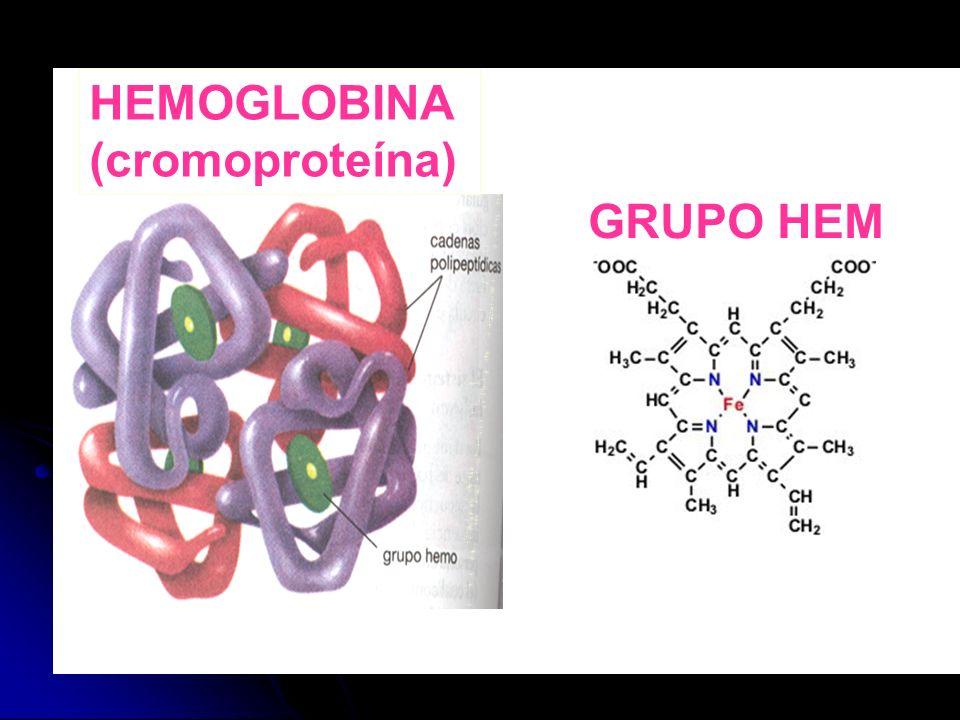 HEMOGLOBINA (cromoproteína)