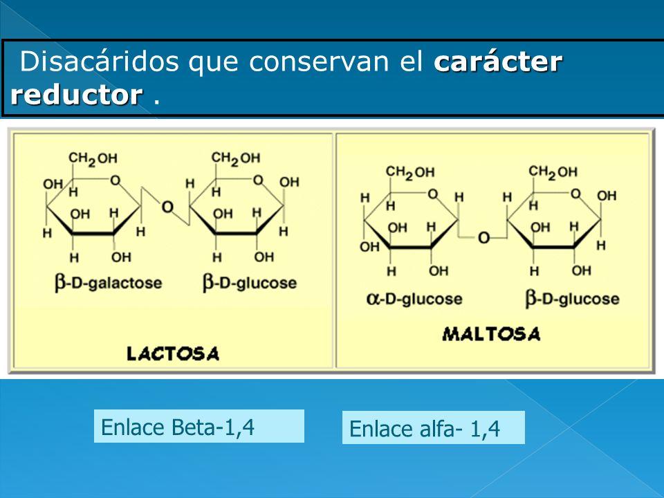 Disacáridos que conservan el carácter reductor .