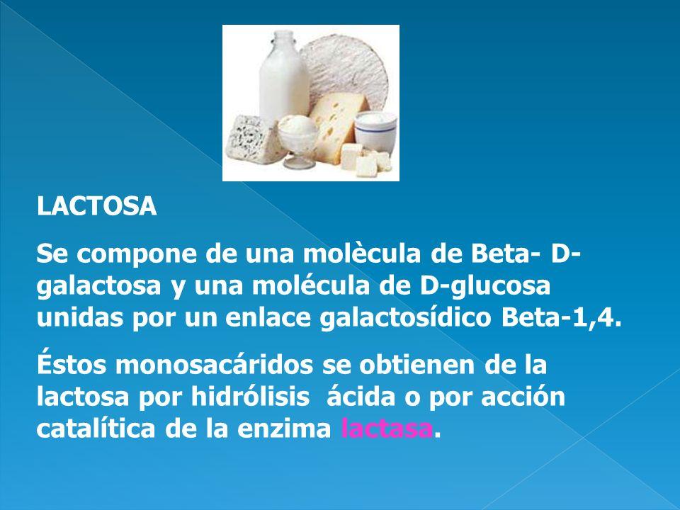 LACTOSA Se compone de una molècula de Beta- D-galactosa y una molécula de D-glucosa unidas por un enlace galactosídico Beta-1,4.