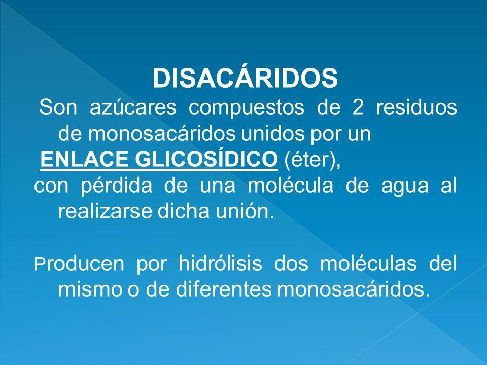 DISACÁRIDOS ENLACE GLICOSÍDICO (éter),