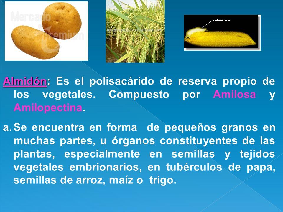 Almidón: Es el polisacárido de reserva propio de los vegetales