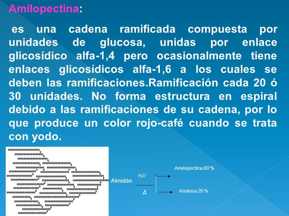 Amilopectina: