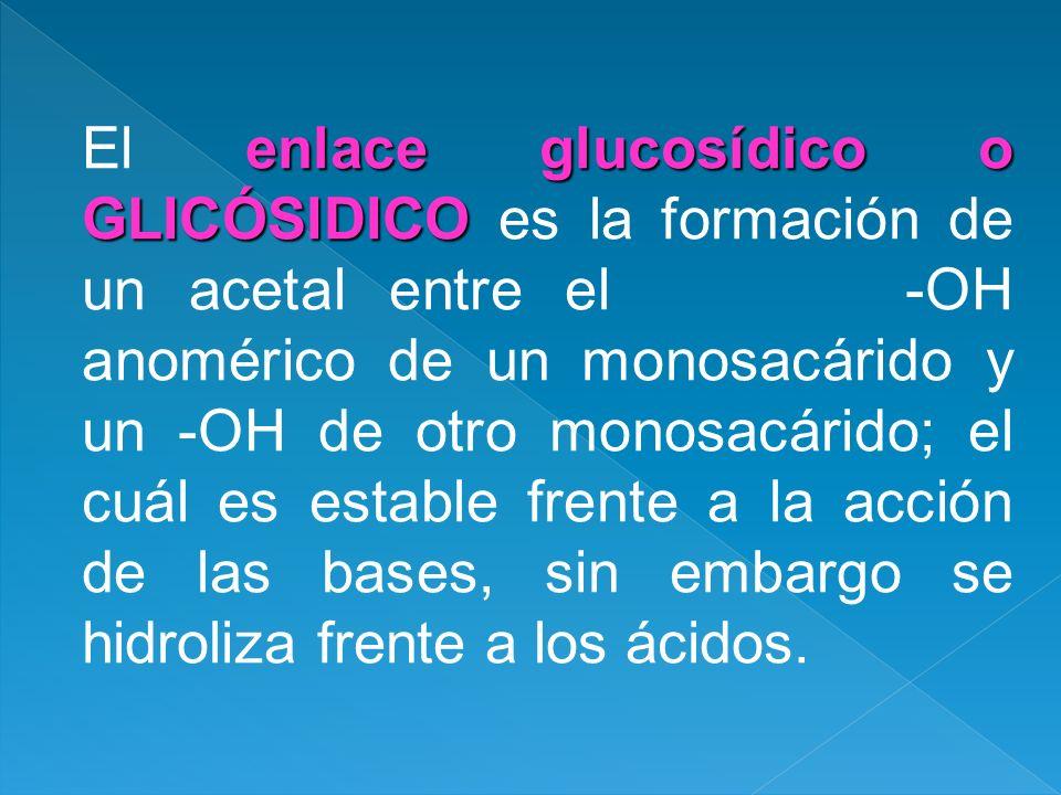 El enlace glucosídico o GLICÓSIDICO es la formación de un acetal entre el -OH anomérico de un monosacárido y un -OH de otro monosacárido; el cuál es estable frente a la acción de las bases, sin embargo se hidroliza frente a los ácidos.