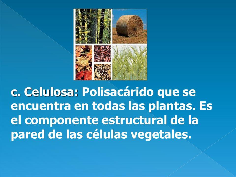 c. Celulosa: Polisacárido que se encuentra en todas las plantas