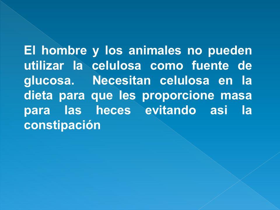 El hombre y los animales no pueden utilizar la celulosa como fuente de glucosa.