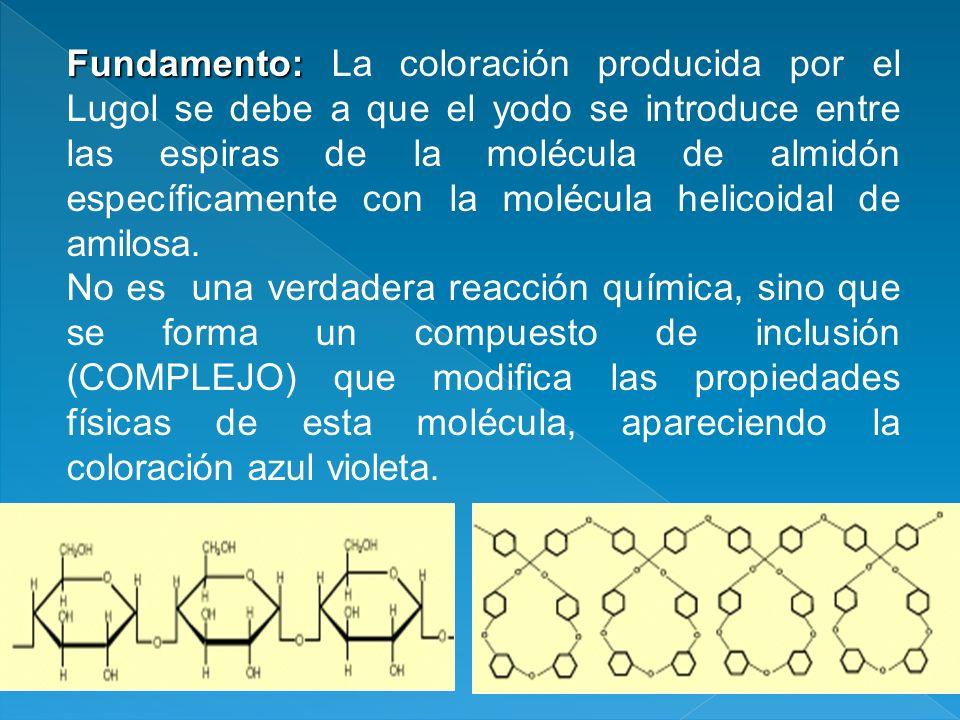 Fundamento: La coloración producida por el Lugol se debe a que el yodo se introduce entre las espiras de la molécula de almidón específicamente con la molécula helicoidal de amilosa.