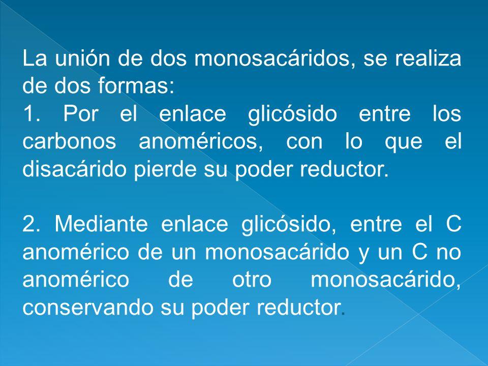 La unión de dos monosacáridos, se realiza de dos formas: