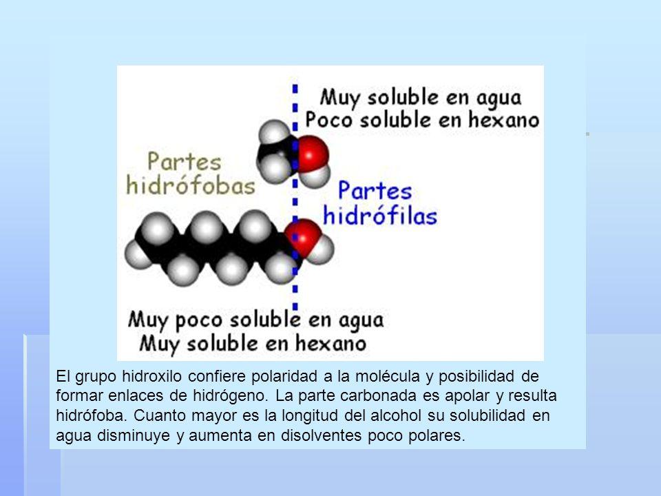 El grupo hidroxilo confiere polaridad a la molécula y posibilidad de formar enlaces de hidrógeno.