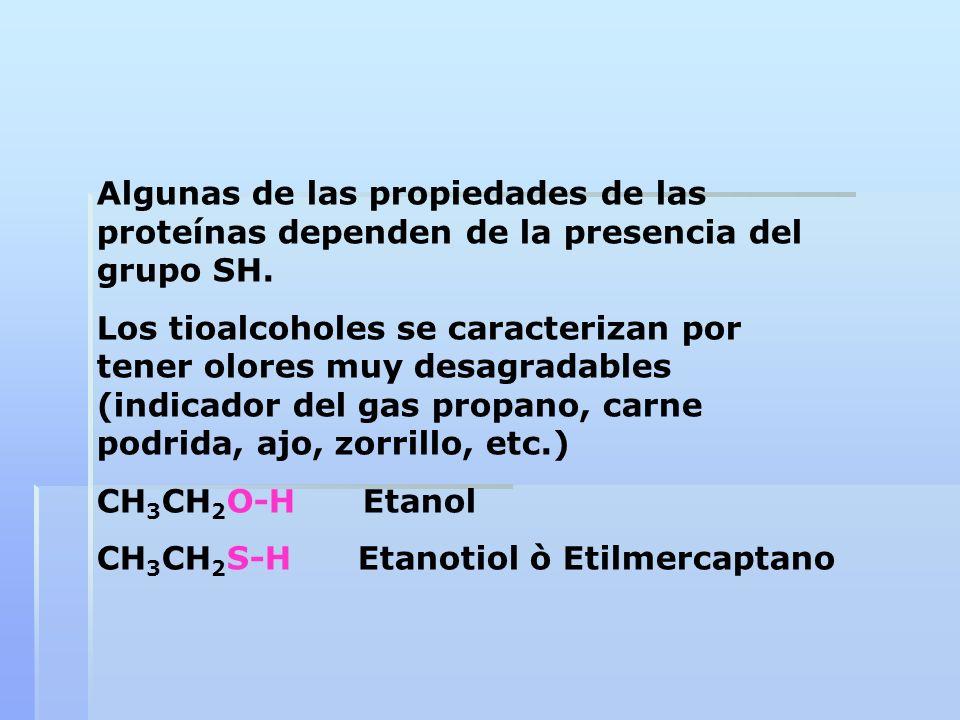 Algunas de las propiedades de las proteínas dependen de la presencia del grupo SH.