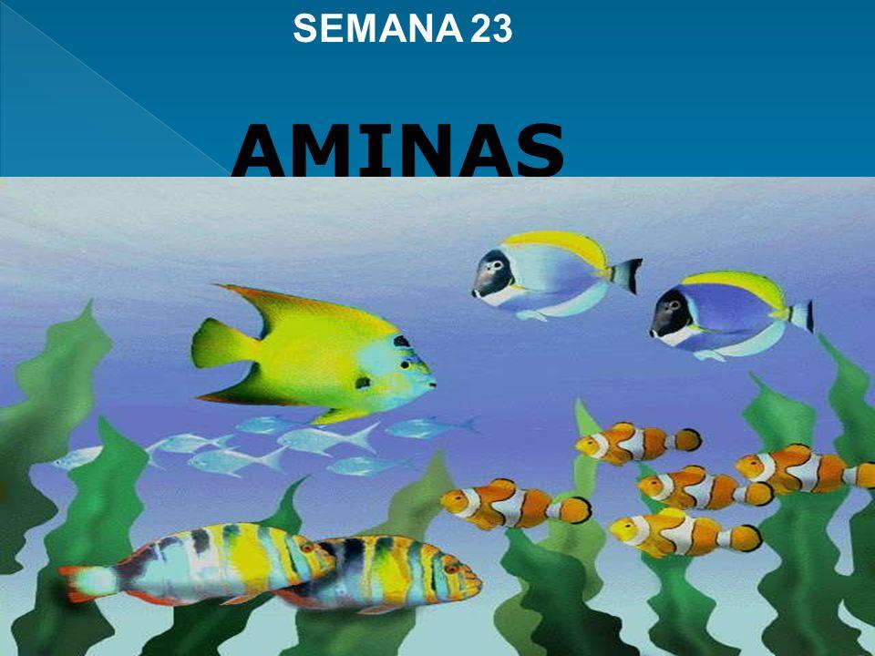 SEMANA 23 AMINAS
