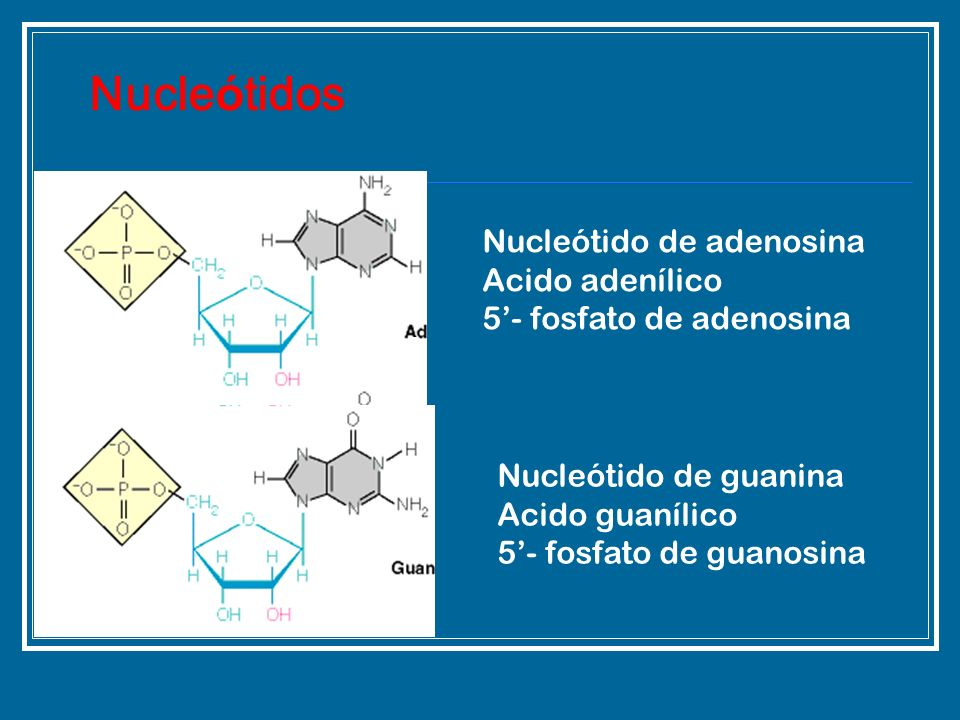 Nucleótidos Nucleótido de adenosina Acido adenílico