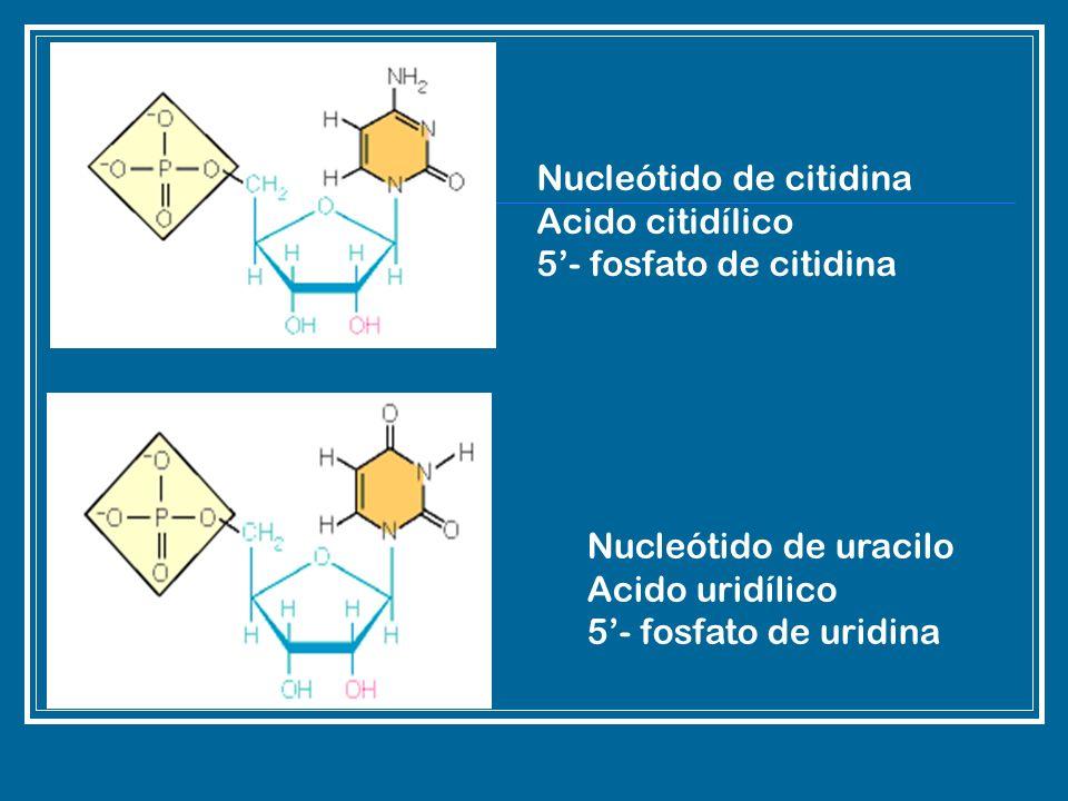 Nucleótido de citidina
