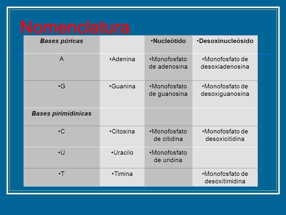 Nomenclatura Bases púricas Nucleótido Desoxinucleósido A Adenina