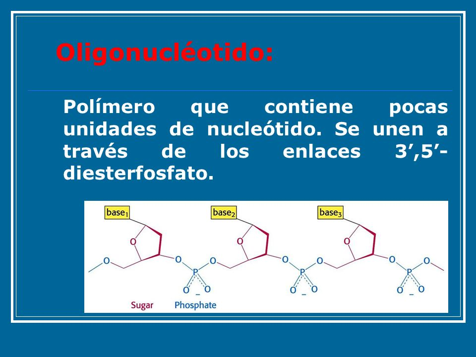 Oligonucléotido:Polímero que contiene pocas unidades de nucleótido.