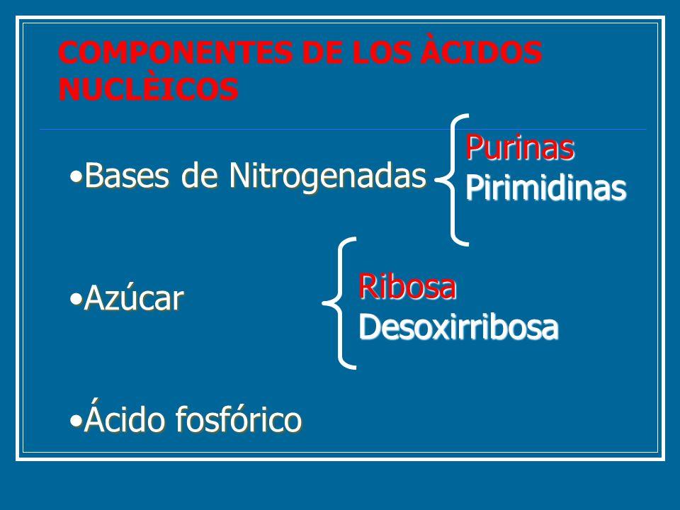Purinas Pirimidinas Bases de Nitrogenadas Azúcar Ribosa