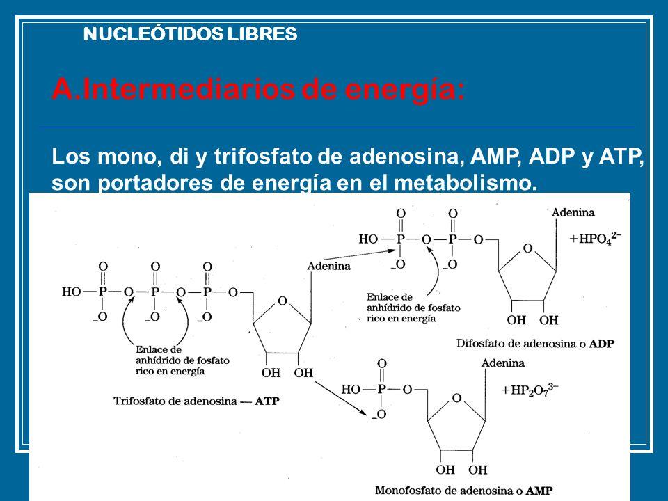 A.Intermediarios de energía: