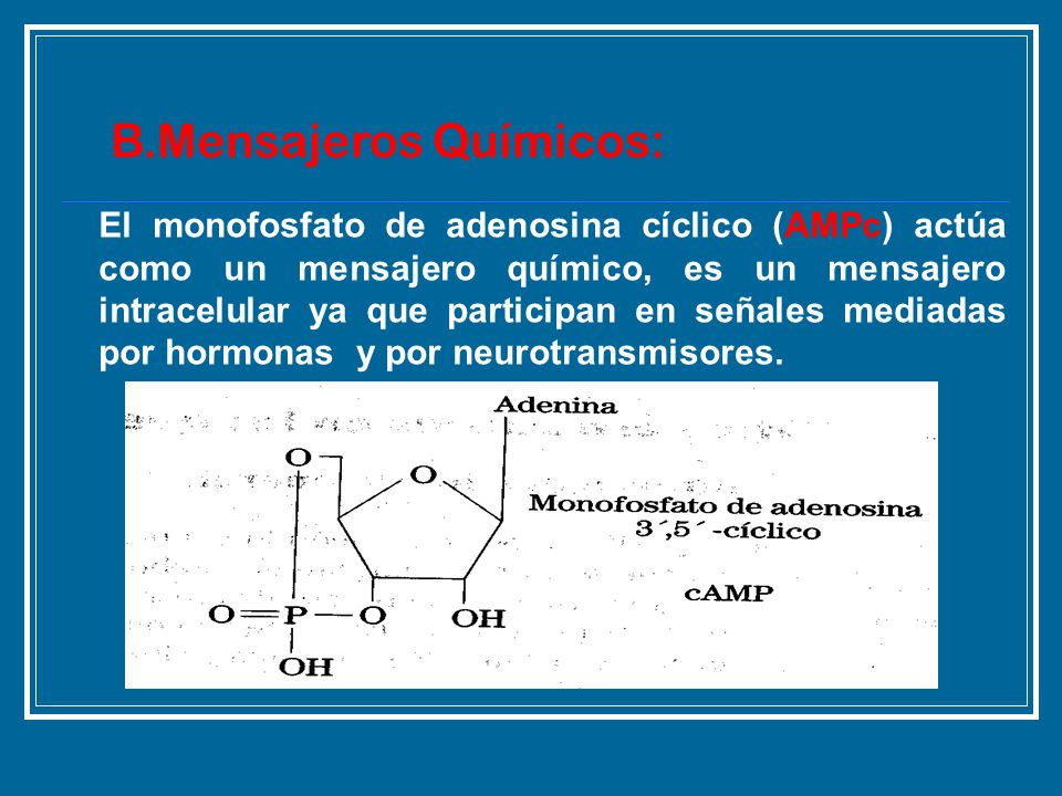 B.Mensajeros Químicos: