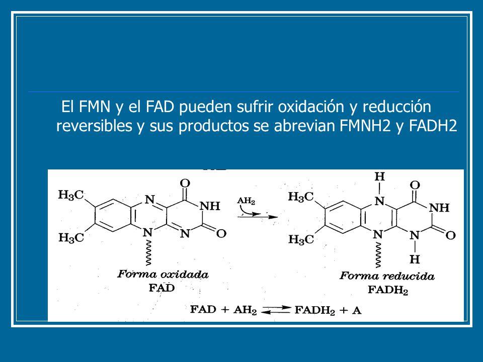 El FMN y el FAD pueden sufrir oxidación y reducción