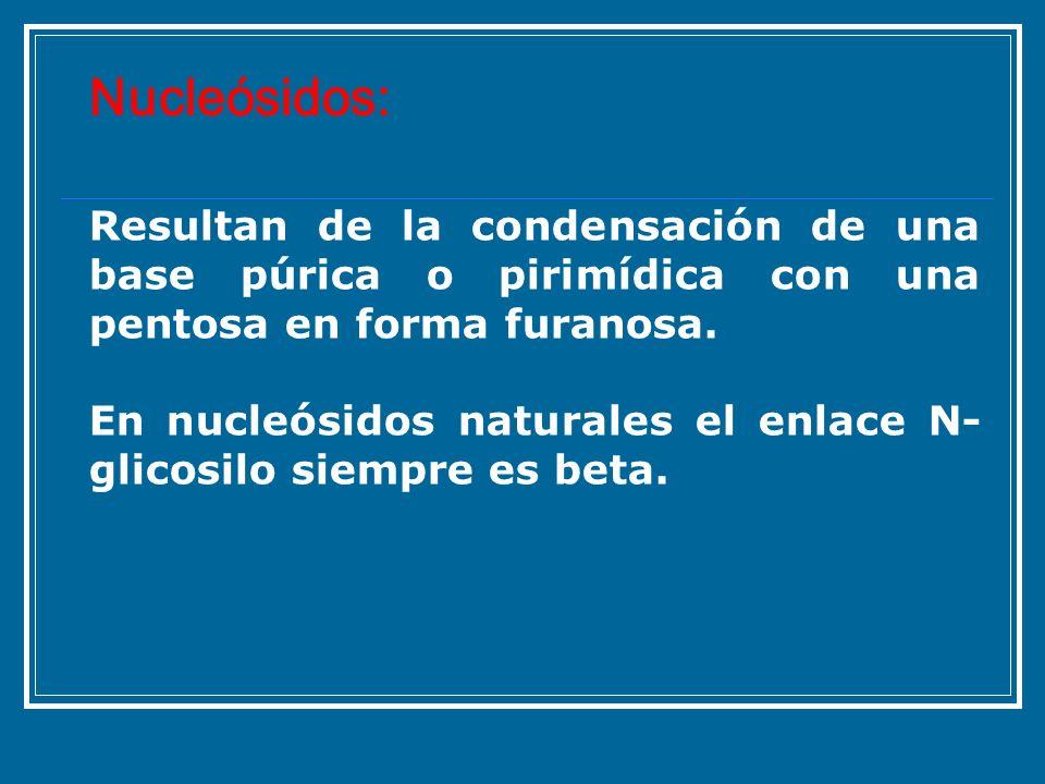 Nucleósidos:Resultan de la condensación de una base púrica o pirimídica con una pentosa en forma furanosa.