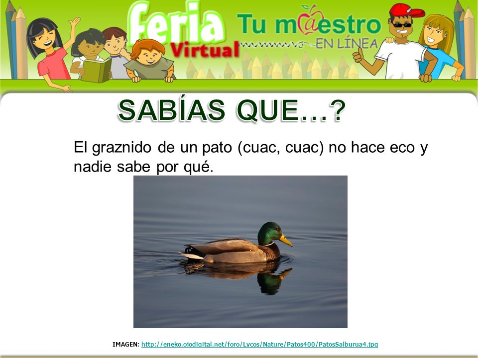 SABÍAS QUE… El graznido de un pato (cuac, cuac) no hace eco y nadie sabe por qué.