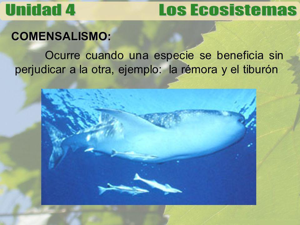 COMENSALISMO: Ocurre cuando una especie se beneficia sin perjudicar a la otra, ejemplo: la rémora y el tiburón.