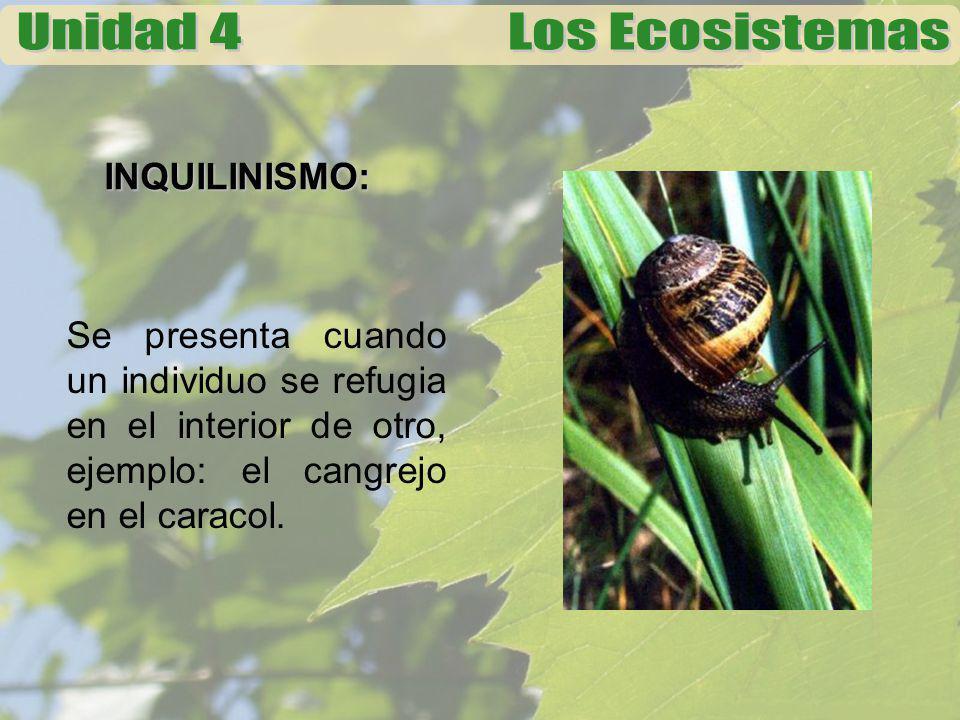 INQUILINISMO: Se presenta cuando un individuo se refugia en el interior de otro, ejemplo: el cangrejo en el caracol.