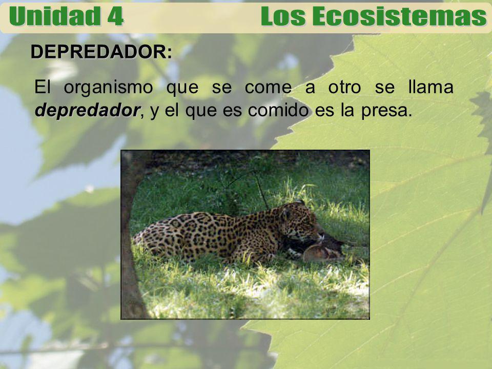DEPREDADOR: El organismo que se come a otro se llama depredador, y el que es comido es la presa.